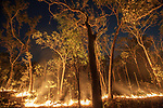 Bushfire, Arnhem Land, Northern Territory, Australia<br /> A fire crackles through a woodland, but it is not completely destructive. It supports the ecological system by burning off dead grass and shrubs and stimulates regrowth. Trees remain largely unscathed by the swift fires, which appear with astounding frequency across Australia's vast stretches of open country. I photographed this scene just as the stars were appearing in the night sky.<br /> Canon EOS-1Ds Mark II, EF16-35mm f/2.8 lens, f/5 for 4 seconds, ISO 400