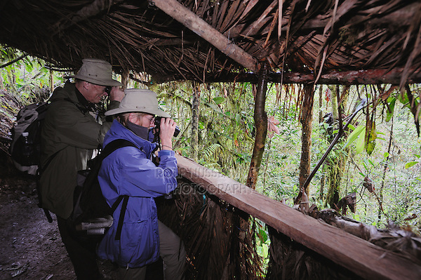 Birders in blind looking for Andean Cock-of-the-rock (Rupicola peruviana) at Paz de las aves, Paz de las aves, Mindo, Ecuador, Andes, South America