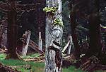 Haida Gwaii, Haida  totem pole, longhouse, SGang Gwaay Ilnagaay, or Nan Sdins VIllage, or Ninstints Village, Gwaii Haanas National Park, Queen Charlotte Islands, British Columbia, Canada, North America, Most intact aboriginal long house on the Canadian west coast, Haida Gwaii is the new name for the Queen Charlotte Islands, Image taken in 1983..