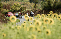 sunflowers at the end of september<br /> <br /> 84th La Flèche Wallonne 2020 (1.UWT)<br /> 1 day race from Herve to Mur de Huy (202km/BEL)<br /> <br /> ©kramon