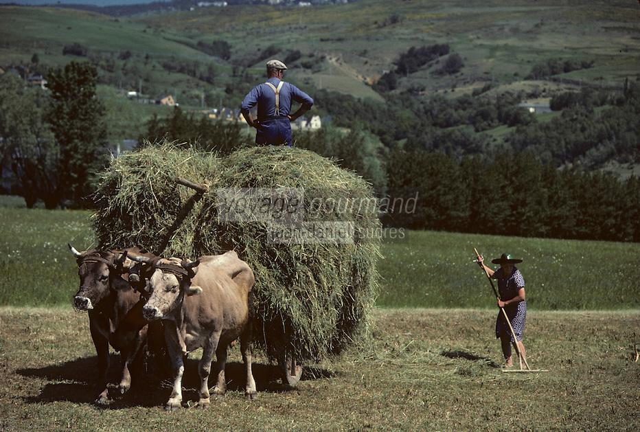 Europe/France/Languedoc-Roussillon/66/Pyrénées -Orientales/Cerdagne/Env de Saillagouse : Fenaison<br /> <br /> PHOTO D'ARCHIVES // ARCHIVAL IMAGES<br /> FRANCE 1980