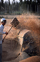 Workers during a harvest in Xinjiang, China.<br /> 18-AUG-00
