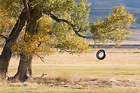 I followed a convoy of 18-wheeler trucks north out of Gunnison and was glad for the excuse to stop and photograph this old tire swing.  But as I was setting up to photograph, they appeared on a road in the background and stopped at a closed gate.  I had to wait for them to leave before I could take this image.<br /> <br /> Canon EOS 5D, 70-200 f/2.8 L lens