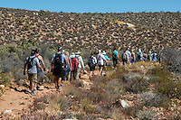 Red Rock Canyon, Nevada.  Hikers on Pine Creek Canyon Trail.