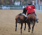 3 November 2010:  An outrider snares a loose horse during morning works out for the 2010 Breeders Cup at Churchill Downs in Louisville, Kentucky.(Scott Serio/Eclipse Sportswire)