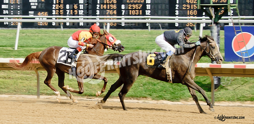 Throughleap winning at Delaware Park on 7/19/14