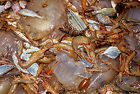 Artisanal fishing, commercial fishing, overfishing, bycatch, Shrimp and bycatch of juvenile fish and jellyfish from semi-industrial shrimp dragger. Maputo, Mozambique, Africa, Indian Ocean