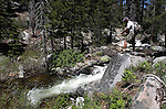 Flyfishing in the Chiquito Creek in the Sierra National Forest, near Oakhurst, Ca., on July 12, 2011..Photo by Cathleen Allison