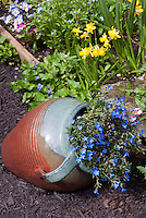 Spring Pot ceramic container garden with perennial blue flowers of Lithodora diffusa Grace Ward, near dwarf daffodils, Violas