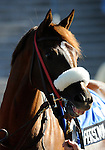 09 September 19: Personal Signal prior to the grade 3 Summer Stakes for two year olds at Woodbine Racetrack in Rexdale, Ontario.