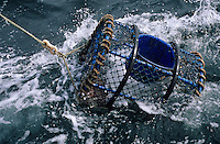 """Europe/France/Bretagne/29/Finistère/Le Conquet: pêche au homard sur le """"Louarn Ar Mor"""""""