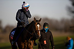 November 3, 2020: Sistercharlie, trained by trainer Chad C. Brown, exercises in preparation for the Breeders' Cup Filly & Mare Turf at  Keeneland Racetrack in Lexington, Kentucky on November 3, 2020. Alex Evers/Eclipse Sportswire/Breeders Cup