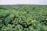 Paysage de laves colonisees par la vegetation (malpais) devant le volcan du Monte Corona. Ile de Lanzarote. .Lava landscape colonized by vegetation (malpais), Monte Corona volcano on the background. Lanzarote island