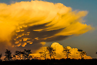Mammatus clouds bubble downward from the anvil of a cumulonimbus cloud at sunset in Texas.