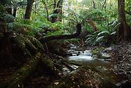 Image Ref: YR172<br /> Location: Wirrawilla Rainforest, Toolangi<br /> Date: 27.01.18