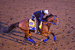 November 5, 2020: By My Standards, trained by trainer W. Bret Calhoun, exercises in preparation for the Breeders' Cup Classic at Keeneland Racetrack in Lexington, Kentucky on November 5, 2020. John Voorhees/Eclipse Sportswire/Breeders Cup/CSM