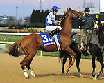 Shackleford and jockey Jesus Castanon in the post parade for the G1 Clark H. at Churchill Downs.November 23, 2012