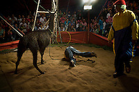 A boy falls off a llama during an act at the Jhon Danyer Circus. Around a dozen small circuses wander the poorer neighbourhoods around the city of Medellin putting on performances in what can be a hand to mouth existence. Despite falling audience numbers, new health and safety regulations and other bureaucracy these small family businesses, many of whom have existed for generations, still scrape a living in a world where the people are more accustomed to being entertained by soap operas than by live entertainment.