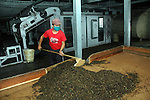 INDIA (West Bengal - Darjeeling) June 2007, A factory worker of Makaibari tea estate working inside the Makaibari Tea Factory. Makaibari produces the most expensive tea in the world. They produce the tea organically (without using any fertilizers or spraying pesticides)through permaculture.  Makaibari is situated at the misty foot hills of Darjeeling Himalayas - Arindam Mukherjee