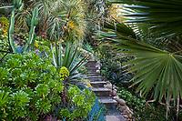 Hillside garden design with succulents (Aeonium arboreum) and palms in San Diego garden of Jim Bishop and Scott Borden.