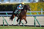 TOYOAKE,JAPAN-JAN 10: Pixie Knight,ridden by Yuichi Fukunaga,wins the Shinzan Kinen at Chukyo Racecourse on January 10,2021 in Toyoake,Aichi,Japan. Kaz Ishida/Eclipse Sportswire/CSM