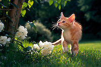 Kitten walking through grass and looking at flowers.