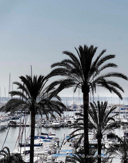 Passeig Maritimo, Palma, Mallorca. Palm trees line the road which runs alongside the large marina facilities.
