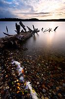Log fallen into Lake Ozette and autumn leaves, Tivoli Island, Lake Ozette, Olympic National Park, Washington, USA