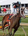 May 18, 2012 In Lingerie (#7), ridden by John Velazquez and trained by Todd Pletcher, wins the 88th running of the Black-Eyed Susan Stakes at Pimlico Race Course in Baltimore, Maryland. photo by Joan Fairman Kanes