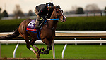 November 1, 2020: Nashville, trained by trainer Steven M. Asmussen, exercises in preparation for the Breeders' Cup Sprint at Keeneland Racetrack in Lexington, Kentucky on November 1, 2020. Carolyn Simancik/Eclipse Sportswire/Breeders Cup