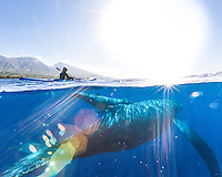 A mother whale and her calf swim under a kayaker off of the coast of West Maui.