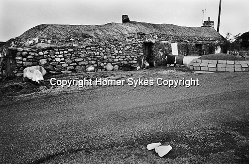 Milk delivery across the road from a traditional thatched stone  long house, Callanish, Isle of Lewis and Harris,   Outer Hebrides, Highland and Islands Scotland 1974