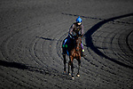 November 2, 2020: Siskin, trained by trainer Ger Lyons, exercises in preparation for the Breeders' Cup Mile at  Keeneland Racetrack in Lexington, Kentucky on November 2, 2020. Alex Evers/Eclipse Sportswire/Breeders Cup