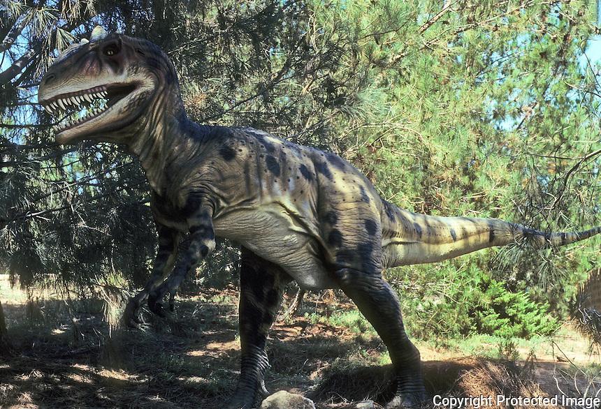 Pre-historic Animals: Allosaurus--predator, Jurassic, 135 million years ago. Ht., 16.5 ft.: Wt., up to 4 tons. Found--mostly Utah.  DYNAMATION Inc.