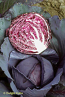HS37-041a  Red Cabbage - small head, short core - Regal Red variety