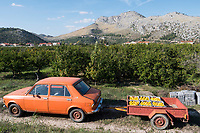 CROATIA, Neretva also known as the Narenta river or Drina river valley, fruit and vegetable farming, harvest of oranges