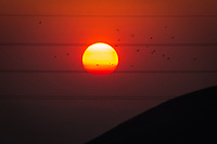 Like a bright orange beachball, the sun straddles utility lines  near sunset at Coyote Hills Regional Park while a flurry of gulls punctuate the sky.  The bright orange and red hues are due to the Camp Fire wildfire burning in  Butte County some 150 miles to the north and east.