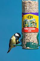 Kohlmeise an der Vogelfütterung, Fütterung am Futtersilo, Körnerfutter, Kohl-Meise, Meise, Meisen, Parus major, great tit. Ganzjahresfütterung, Vögel füttern im ganzen Jahr, Vogelfutter der Firma GEVO