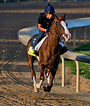 LOUISVILLE, KY - APRIL 28: Free Drop Billy, trained by Dale Romans, exercises in preparation for the Kentucky Derby at Churchill Downs on April 28, 2018 in Louisville, Kentucky. (Photo by Scott Serio/Eclipse Sportswire/Getty Images)
