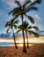Palm trees on beach at Salt Pond Beach Park, Kauai, Hawaii