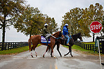 October 30, 2020: Cowan, trained by trainer Steven M. Asmussen, exercises in preparation for the Breeders' Cup Juvenile Turf Sprint at Keeneland Racetrack in Lexington, Kentucky on October 30, 2020. Alex Evers/Eclipse Sportswire/Breeders Cup