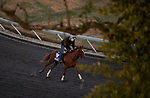 November 2, 2020: Second Of July, trained by trainer Philip A. Gleaves, exercises in preparation for the Breeders' Cup Juvenile Turf Sprint at Keeneland Racetrack in Lexington, Kentucky on November 2, 2020. Carolyn Simancik/Eclipse Sportswire/Breeders Cup