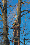 Crossbow hunter in a tree stand