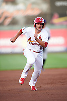 Springfield Cardinals third baseman Paul DeJong (12) running the bases during a game against the Northwest Arkansas Naturals on April 26, 2016 at Hammons Field in Springfield, Missouri.  Northwest Arkansas defeated Springfield 5-2.  (Mike Janes/Four Seam Images)