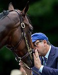 JUNE 5, 2015: Ahmed Zayat, owner of American Pharoah,  kisses American Pharoah getting a bath after exercising in preparation for the 147th running of the Belmont Stakes at Belmont Park in New York, NY. Jon Durr/ESW/CSM