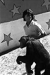 Chimpanzees captive in a Mexican circus 1970s.  Chimps and handler wild animal shown around the town to advertise and promoting the circus. Mazatlan Mexico Mexican state of Sinaloa 1973