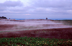 """Grass farm in Linn County, Oregon, the """"Grass Capital of the World"""".  Early morning light, warm dark field steaming."""