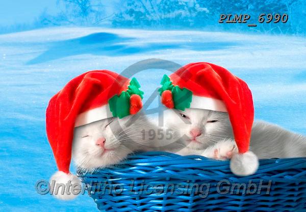 Marek, CHRISTMAS ANIMALS, WEIHNACHTEN TIERE, NAVIDAD ANIMALES, photos+++++,PLMP6990,#xa# ,kittens,cats