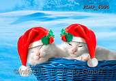 Marek, CHRISTMAS ANIMALS, WEIHNACHTEN TIERE, NAVIDAD ANIMALES, photos+++++,PLMP6990,#xa# ,kittens,cats