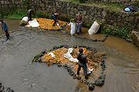 RWANDA, Musanze, Ruhengeri, village Busogo, people wash carrots before selling them on the market in dirty river in Virunga region, it looks like the map of africa / RUANDA, Mohrruebenwaesche in einem schmutzigen Bach, Form des Kontinent Afrikas